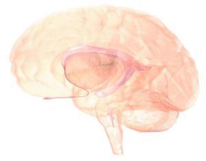 Regenerieren Sich Gehirnzellen