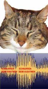 Katzenschnurr Therapie
