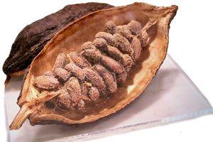 Diabetes: Kakao schützt vor Zuckerfolgen - FOCUS Online