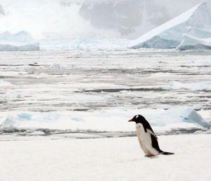 Antarktis: Lebensraum für Adeliepinguine (Foto: Catie Foley, lynchlab.com)