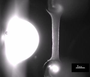 Standbild aus einem Video mit dem schlagenden Labor-Herzmuskel (Foto: uke.de)